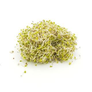 Broccolisprossen samenfest 50g-Schale