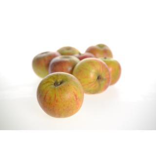Äpfel Cox Orange II süß-sauer