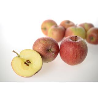 Äpfel  Fuji I süß