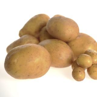 Kartoffel - DICKE - festkochend  12,5kg