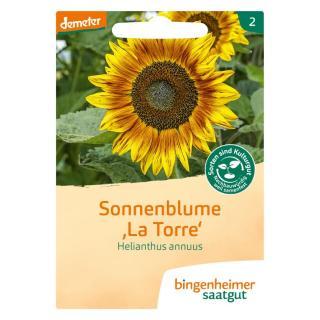 Sonnenblume La Torre Saatgut