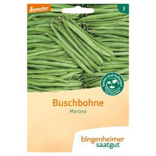 Buschbohnen Marona Saatgut