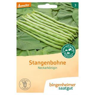 -Saatgut- Stangenbohnen Neckarkönigin