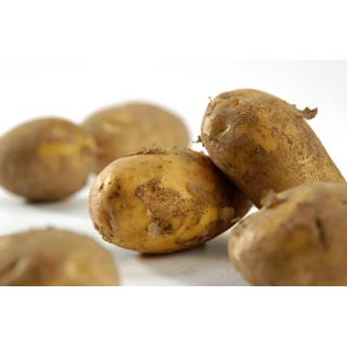Kartoffeln festkochen 12,5 kg